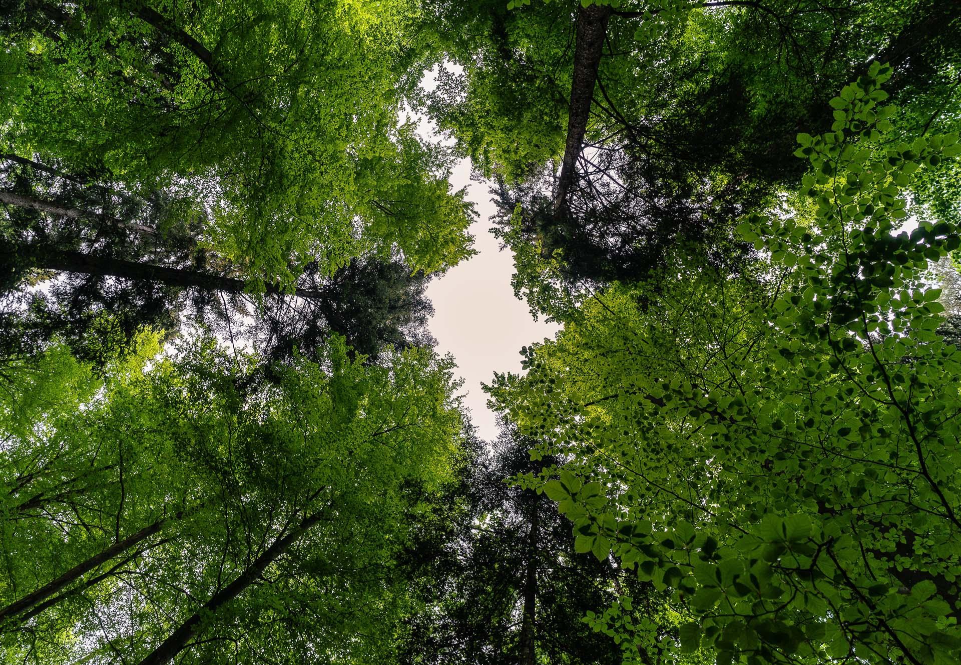 Schutz Deutscher Wald - Landesverband Mecklenburg Vorpommern
